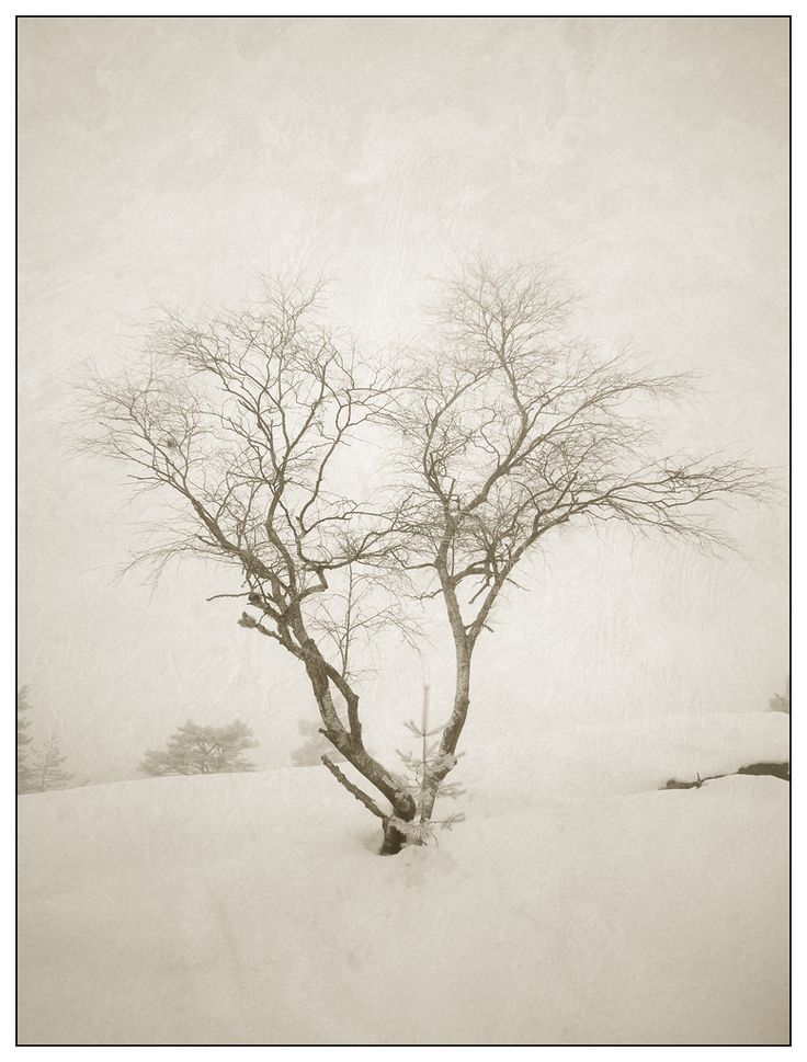 Part two of my winter trees series. All are photographed using my infrared camera and processed using the same recipe/texture