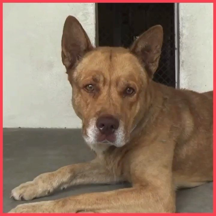 16++ El paso animal shelter images