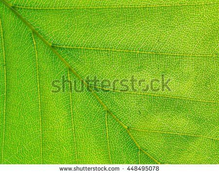 green leaf texture - abstract background