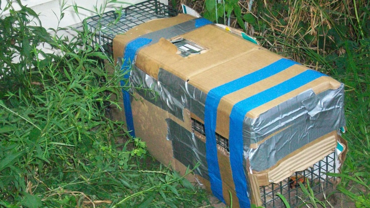Redneck Skunk trap. Don't laugh it works.
