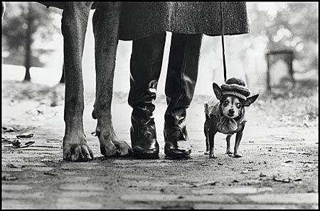 Elliott Erwitt (mit Bildern) Vintage hund, Berühmte