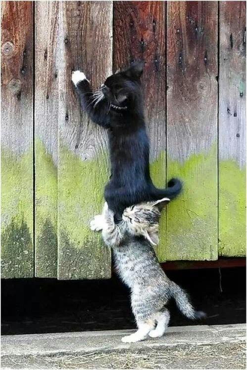 .Samarbete mellan Katter