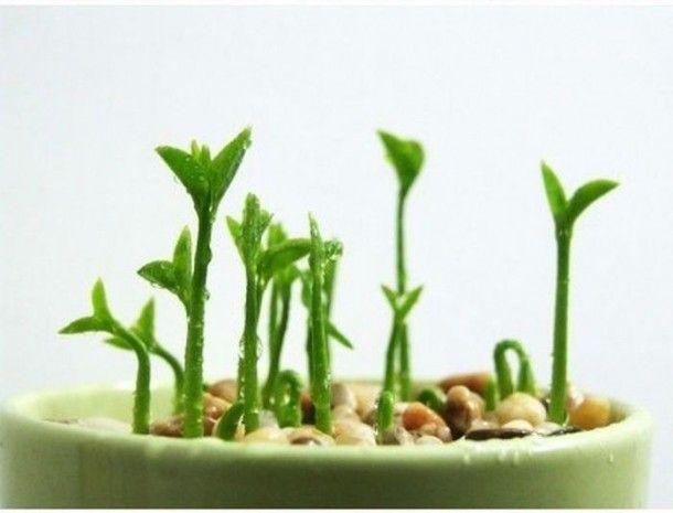 Beautiful Creativity – From Lemon Seeds to Lemon Tree