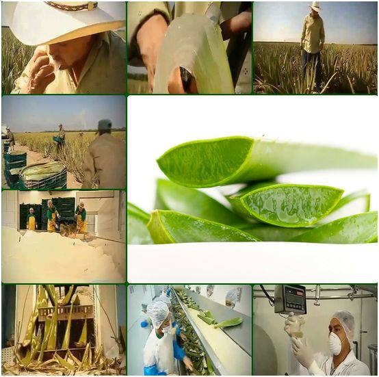1000+ images about l'aloe vera by L.R on Pinterest