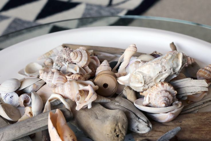 #seashells #driftwood #styling by #placesandgraces