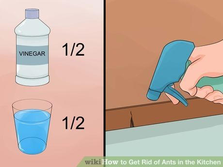 Image titled Get Rid of Ants in the Kitchen Step 4