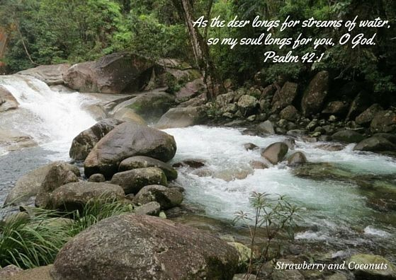 As the deer longs for streams of water, so my soul longs for you, O God. Psalm 42:1  Follow me at facebook.com/bellefever.louise
