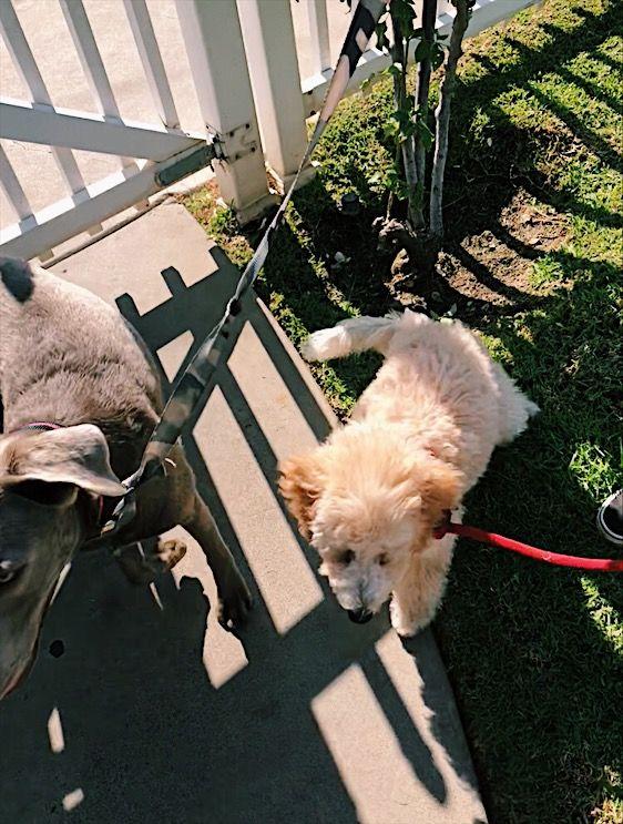 Pin By A On F U R B A B I E S Puppies Animals Dogs