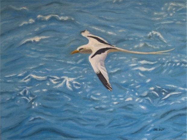 Bermuda longtail---artist Otto Trott