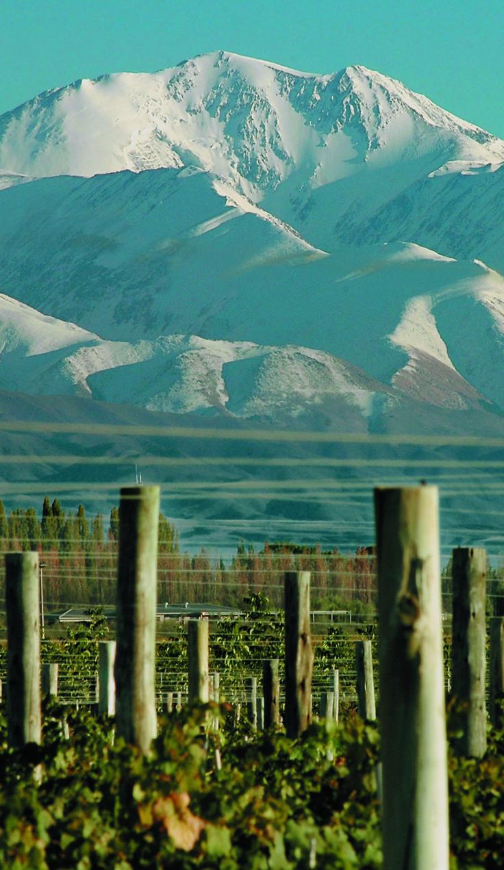 - Mendoza , Argentina - Viñedos al pie de la Cordillera , que los protege de vientos y humedad , creando un microclima unico . . . @swami1951