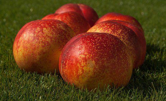 Φρούτα, Αμαρτία, Ροδάκινο Βερίκοκο