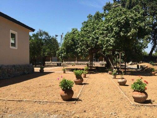 Entrada al patio de los naranjos e higuera