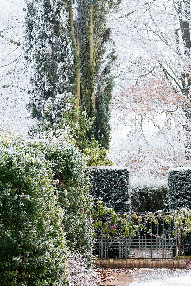 216 best the winter garden images on pinterest winter garden