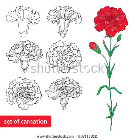 Vector set with outline Carnation or Clove flower, bud and leaves in black and red isolated on white background. Symbol of Mother's day. Ornate flowers for spring design, coloring book in contour style.