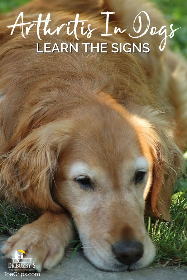 Is It Canine Arthritis Or Aging Learn 7 Signs Of Arthritis In