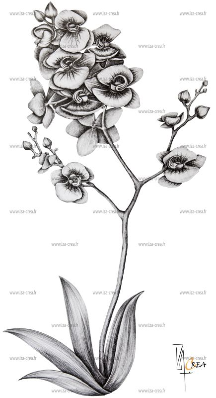 53 best images about mes cr as perso on pinterest - Dessin d orchidee ...