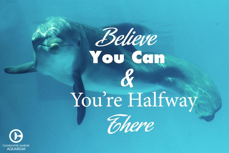 Believe you can and you're halfway there! https://feelmyvibe.com/collections/all