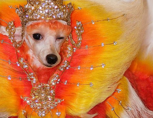 fancypants: Dogs Animal, Animal Paintings, Paintings Dogs, Dyes Dogs, Orange Paintings, Dyed Dogs, Funny Animal, Dogs 10, Poodle Grooms