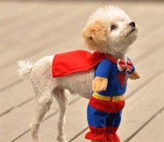 Superman: Halloween Costume, Animals, Dogs, Pet, Funny, Superdog, Puppy, Things