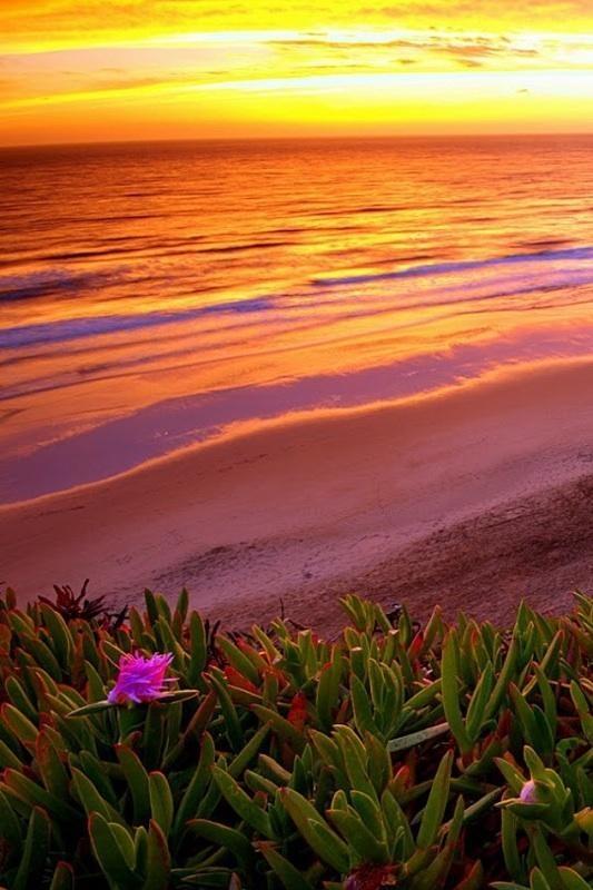 Iphone 6 Orange Flower Wallpaper 88 Best Phone Backgrounds Images On Pinterest Beautiful