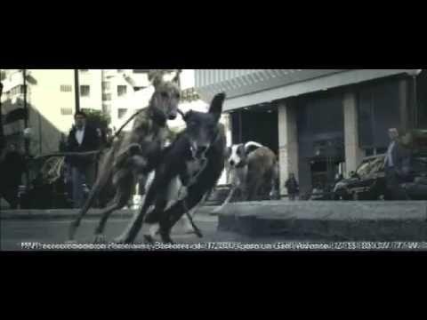 'Galgos', de DDB para Volkswagen Golf - YouTube