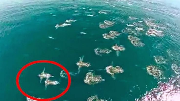 REAL MERMAIDS FOUND ALIVE - REAL MERMAIDS CAUGHT ON TAPE IN FLORIDA!! Re...