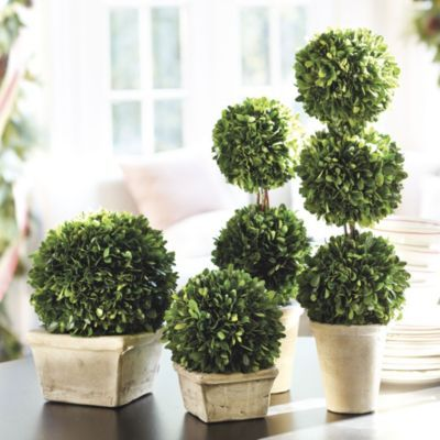 Preserved Boxwood Topiarys | Ballard Designs | Two - 2-ball ($50)  or 3-ball ($59)
