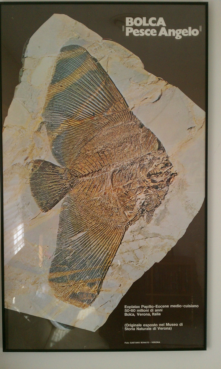 Previous pinner: Had this print of very famous fossil framed-Went to this museum as a kid