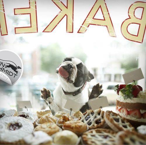 Window Shopping! Like Boston Terrier Dogs on Facebook : http://www.facebook.com/bterrierdogs