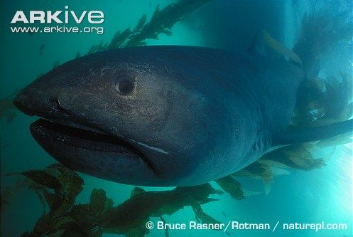 Megamouth shark and pictures of a lot of other sharks.