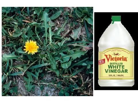 Good Homemade Weed Killer------safe and organic weed killerKill Ideas, Homemade Safe, Homemade Organic, Weed Killers Saf, Homemade Weed Killers, Future Growth, Garden Tips, Vegetables Gardens, Safe Kill