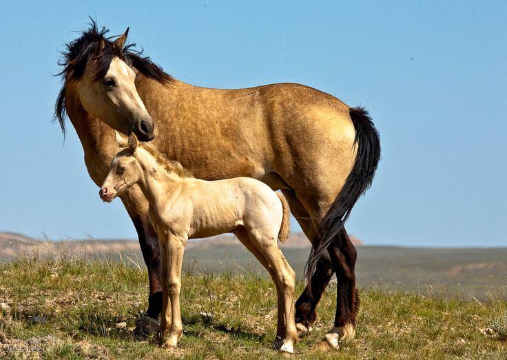 48 best wild horse dre...
