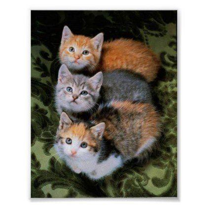 three kittens poster   Zazzle.com