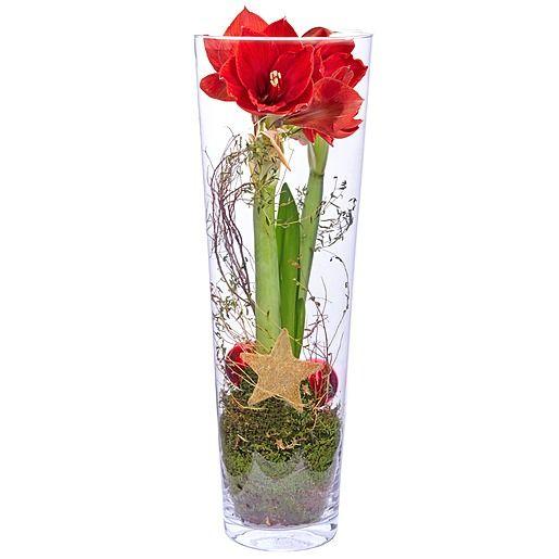 Amaryllis rot im Glas und Rote Glasflasche mit LED Licht