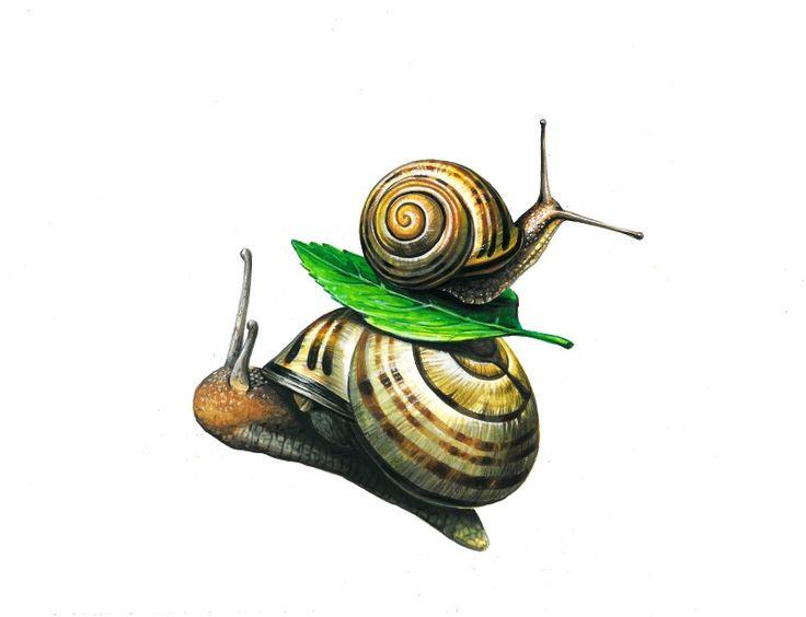 김포 길 미술학원에서 준비한 개체 표현 이번 기초디자인 개체 표현은 달팽이 묘사입니다. 달팽이는 껍질 ...