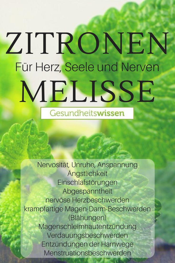 Die Melisse, auch Zitronenmelisse (Melissa officin…