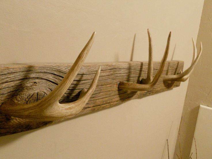 "Antler towel rack""..... Single point horns instead, with dull tips."