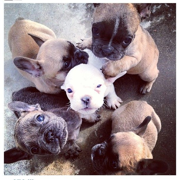 Pile o' puppies!