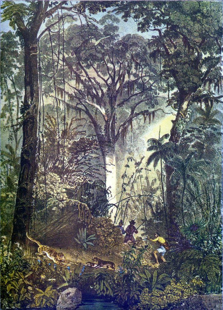 Pinturas Pitorescas: RUGENDAS, Johann Moritz. CHASSE DANS UNE FORÊT VIERGE. Domínio Público.