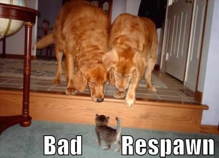 #respawn #kittenKitty Cat, Funny Cat Photos, Funny Pictures, Big Boys, Dogs Running, Kittens, New Friends, Big Dogs, Animal