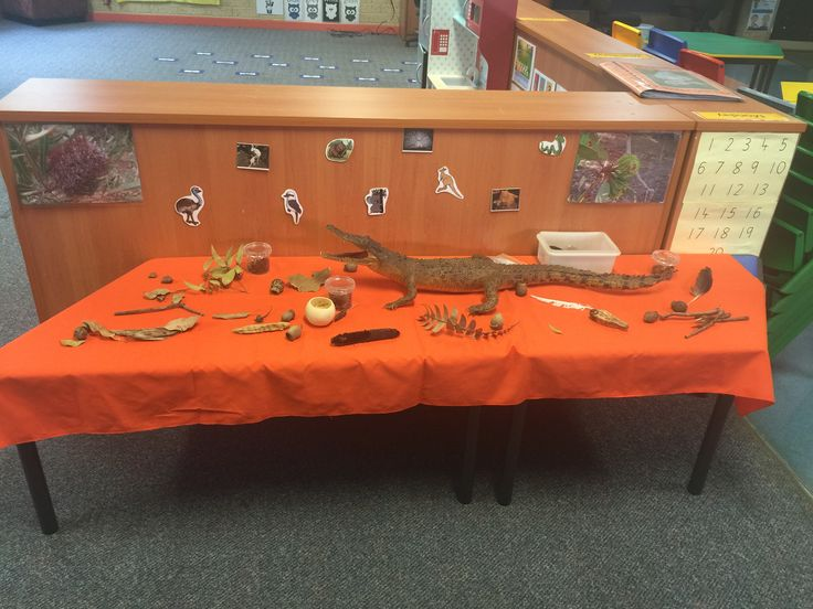 Australian Bush theme-investigative play table. Bush items, magnifying glasses and real stuffed baby crocodile courtesy of my husband!