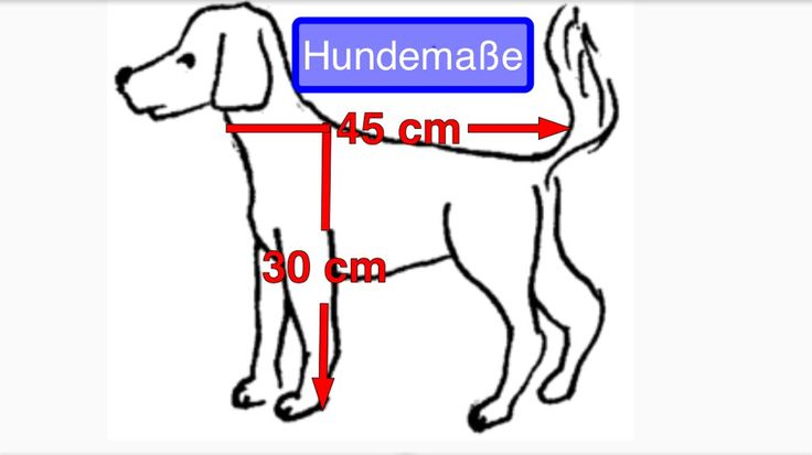 Hundetransportbox, Hundebox für den crashsicheren Hundetransport auf der Rücksitzbank bzw. Rücksitz auch in Cabrios, Kleinstautos und Limousinen