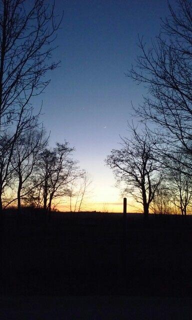 #trees #sunset