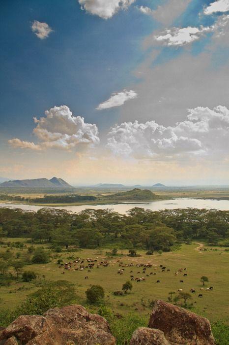 Lake Elmenteita is a soda lake in the Great Rift Valley, about 120 km northwest of Nairobi, Kenya.