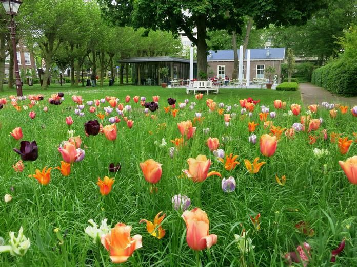 Best Garden Cafes in Amsterdam - Awesome Amsterdam - Dining while being surrounded by leafy plants and blooming flowers is one of the most romantic things I can think of. If you love that too, check out some of these beautiful spots in Amsterdam - Hoftuin