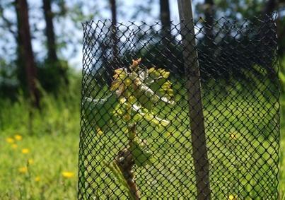 OATLEY VINEYARD English Wine from Somerset since 1989
