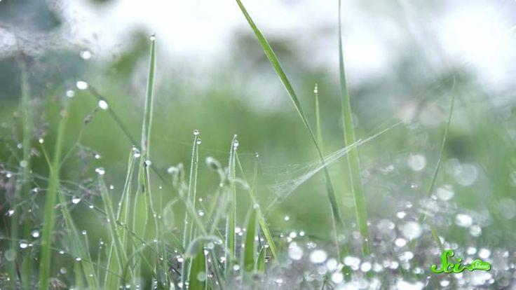 雨のにおいには「ペトリコール」という科学的な名前がついています。 これはギリシャ語で岩を意味するペトラと、血のような物質でギリシャの神々の血管の中を流れていたとされるイコルに由来しています。でもにおいの原因は岩自体にあるわけではありません。雨のにおいは主に植物によってもたらされているのです。
