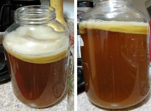 Qué es y cómo preparar Kombucha - bebida probiótica ancestral con altos beneficios para la salud - Vida Lúcida