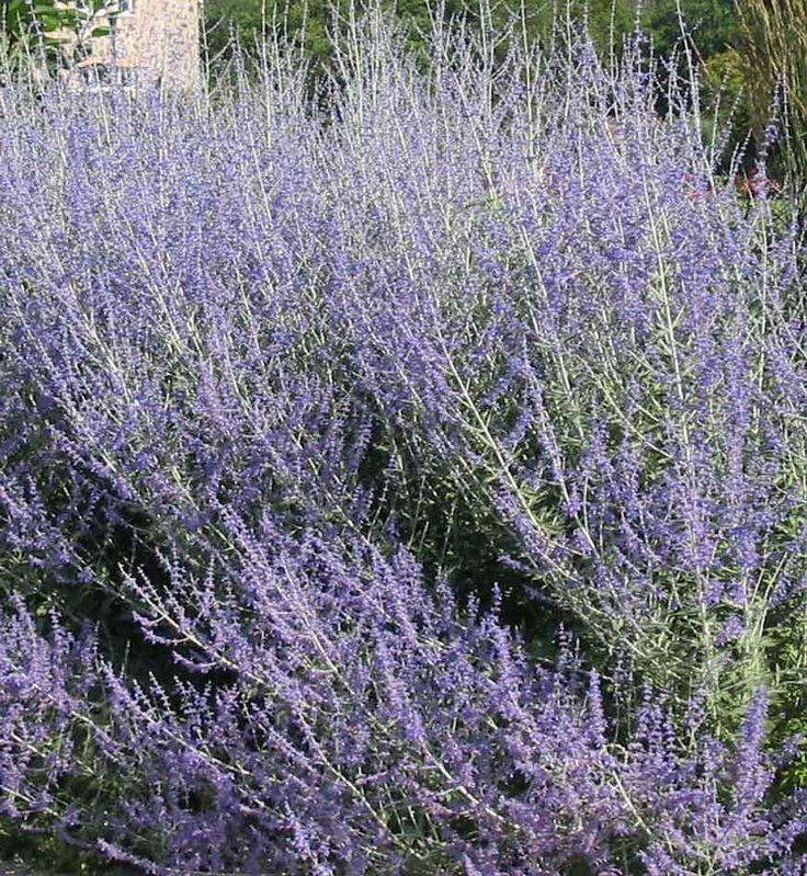 Les 25 meilleures id es de la cat gorie plantes en plein for Plante d interieur plein soleil