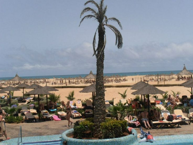 Cape Verde Palm tree and overlooking the beach
